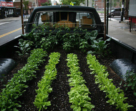 A mobile garden the Johns planted in the back of a pickup truck. Photo courtesy of the Food is Free Project.